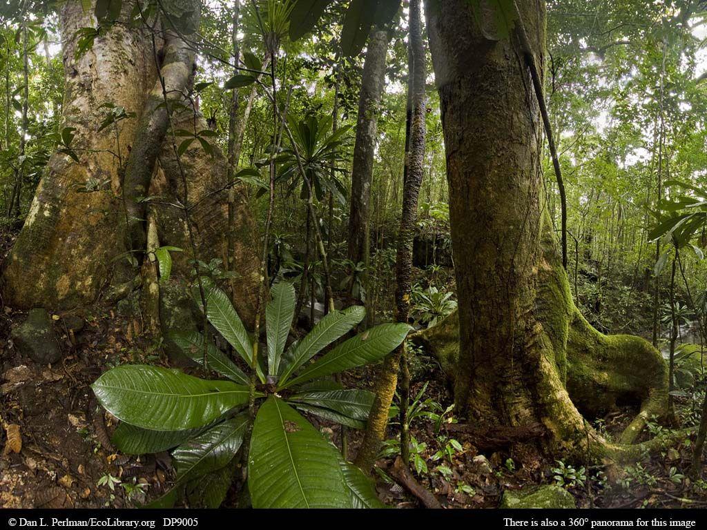 Madagascar Rainforest ~ | Madagascar Wildlife & Rainforest ...