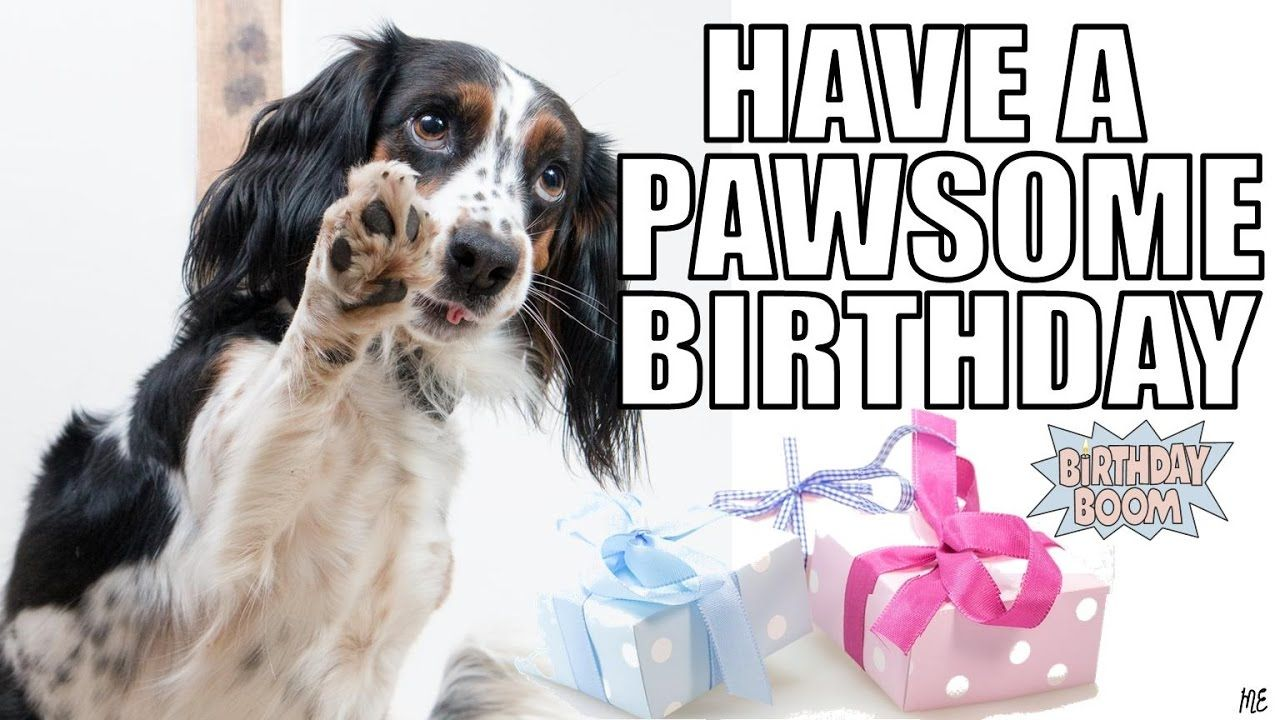 80 Top Funny Happy Birthday Memes Happy Birthday Dog Meme Happy
