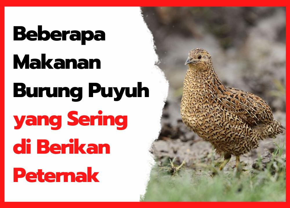 Makanan Burung Puyuh Yang Sering Di Berikan Peternak Di 2021 Burung Puyuh Makanan Burung Burung