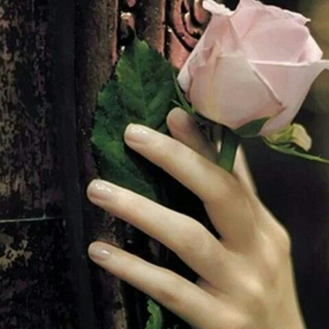 أحضرت فنجان الشاهي وبدأت أسطر كتاباتي حضر طيفي كان ينظر من بعيد شعرت بي حضورة لدية حضور جميل يشعرني ببعض من برودة الجو ورائحة ا Fairy Tales Rose Beautiful