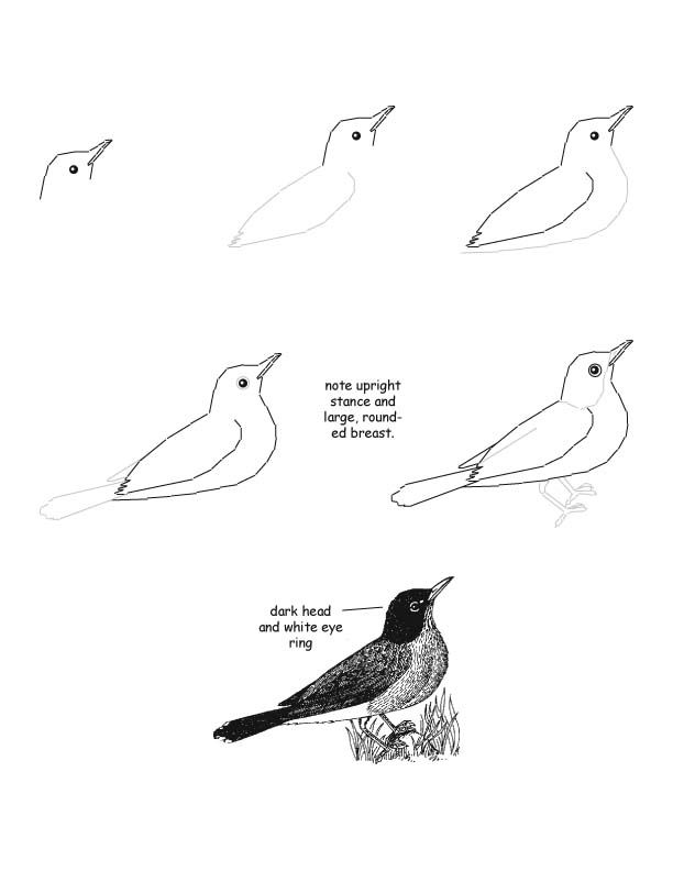 Drawing realistic Birds Step by Step | Citing This ...