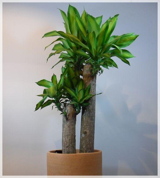 Pasos A Seguir Para Sacar Fuera Las Plantas De Interior Durante El - Plantas-de-interior-verdes