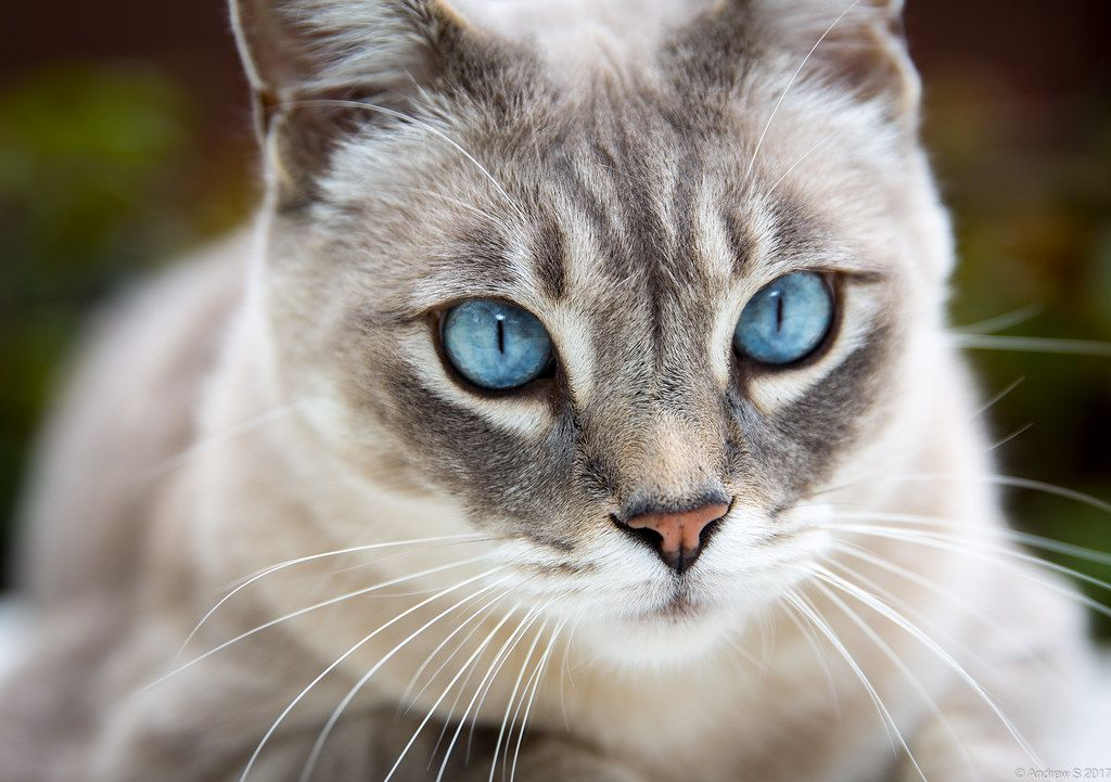 15 Signs That Your Cat Might Be Stressed Cat with blue