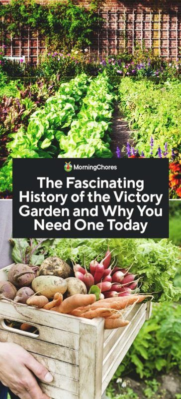 The Fascinating History of the Victory Garden and How to Create One Today
