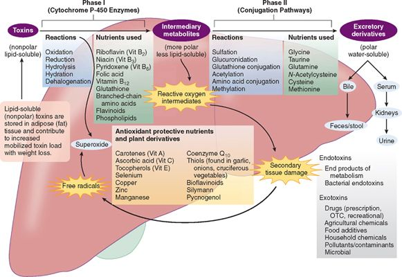 physiology of detoxification