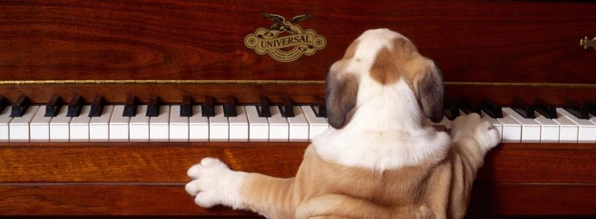 dogplayingpiano_facebook_timeline_cover.jpg (849×312