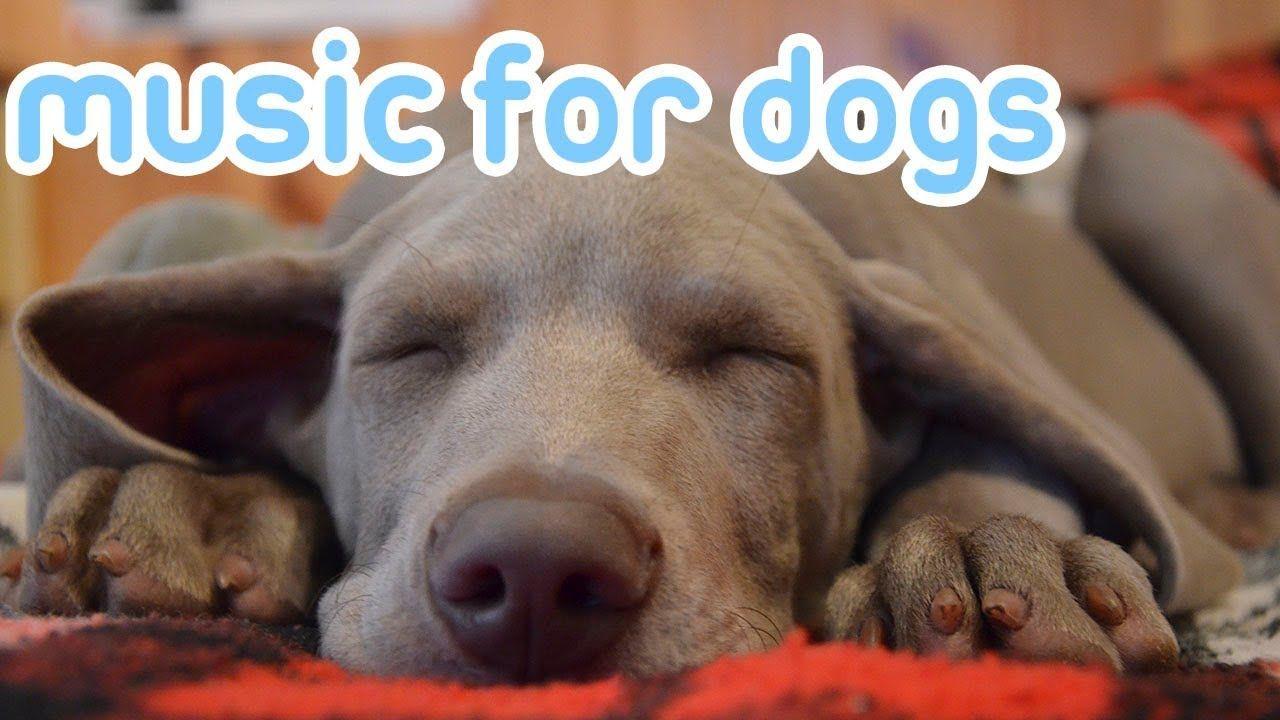 Deep Sleep Relax My Dog Music! Calm Your Dog and Help them