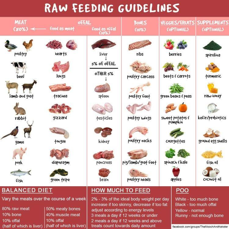 Raw Feeding Make Dog Food Healthy Dog Food Recipes