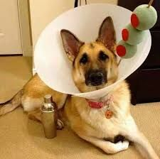 Dog Martini Costume Google Search Best Dog Halloween Costumes