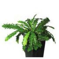Fransenfarn 30 Blätter, Kunstpflanze