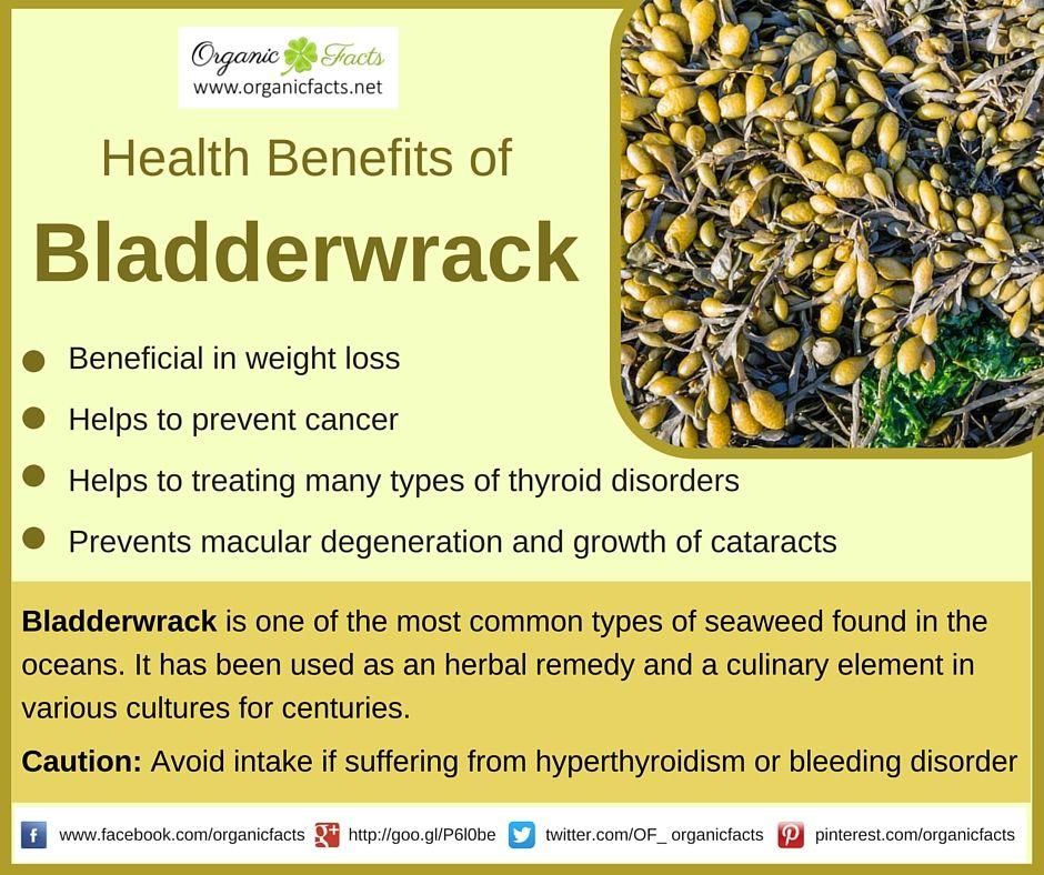 Image result for bladderwrack tea benefits