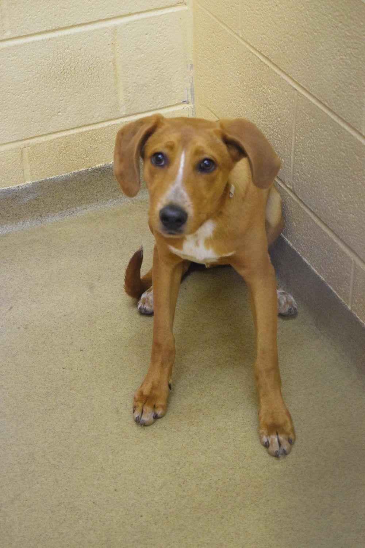 Craigslist Dc Pet Adoption