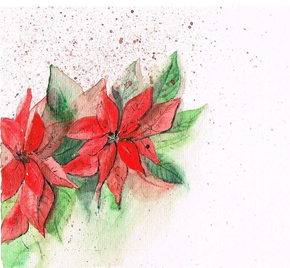 Stelle Di Natale Immagini.Stelle Di Natale Stella Di Natale Fiori Natale