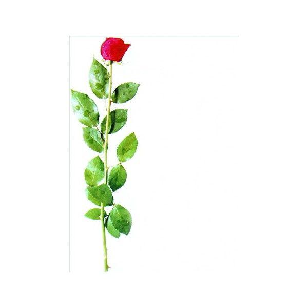"""Дизайн-бумага А4 """"Rose"""" (""""Роза-белый фон"""") 90 г/м2, 25 л., GEOGRAPHICS (AG 398-17) - Legacy"""