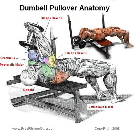 Build Huge Pecs With Dumbbell Pullover Around The World Training Chest Workout