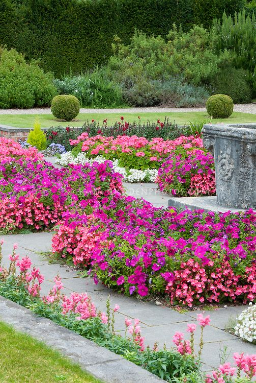 Pink Color Theme Annual Plants Garden, Bedding Plant Pink Flower