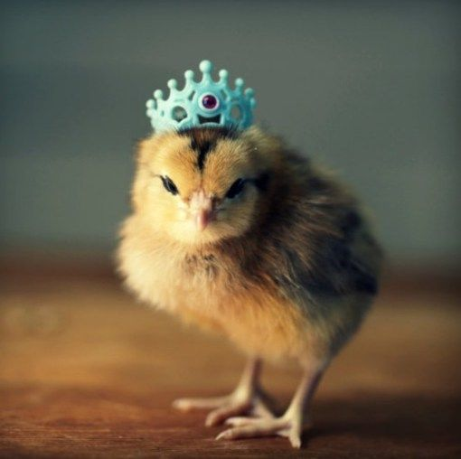 Ten Of The Cutest Chicks In Hats You Will Ever See In Your
