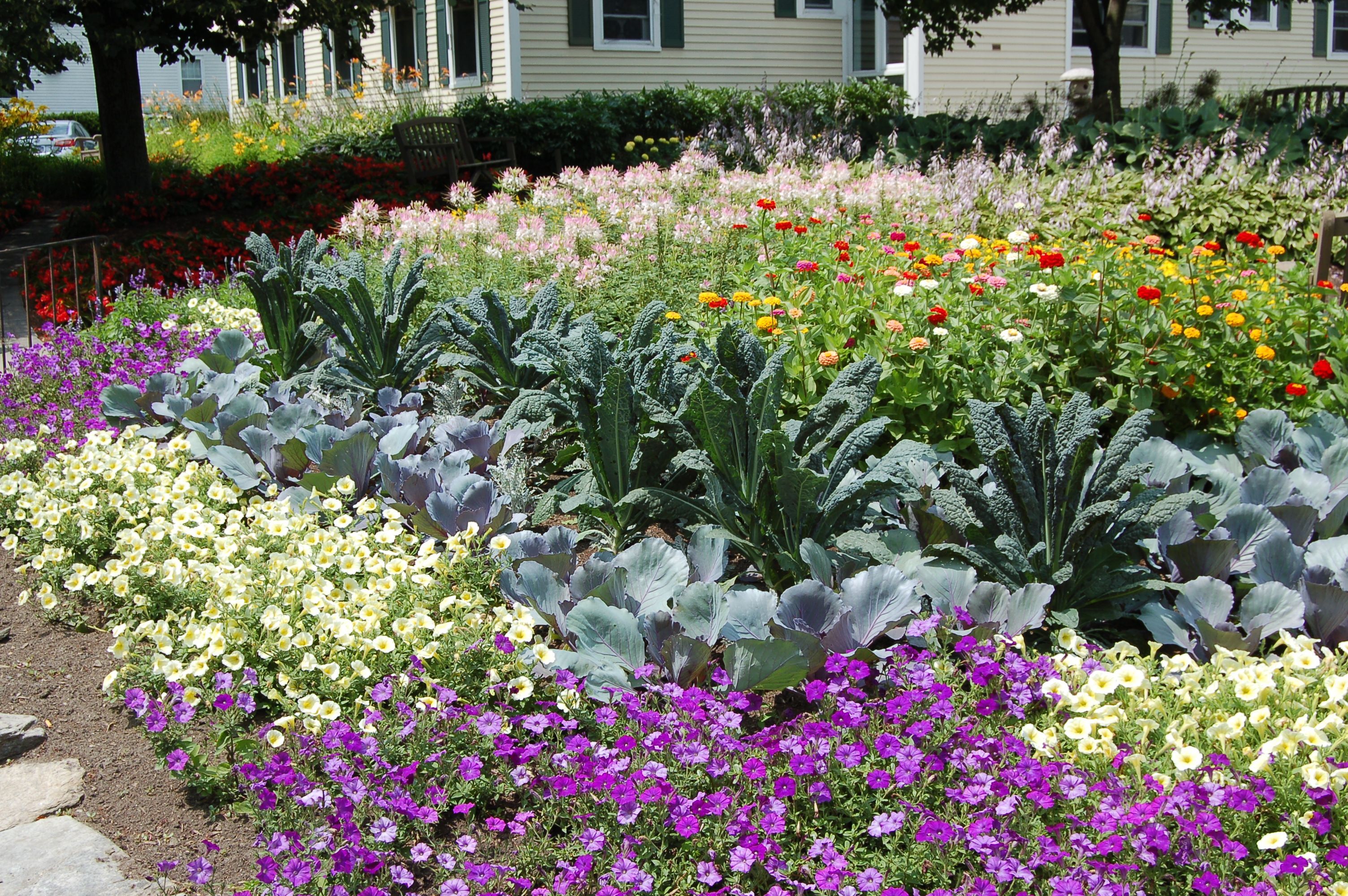 Are You Starting To Plan Your Fall Flower Garden? Donu0027t Overlook The  Potential