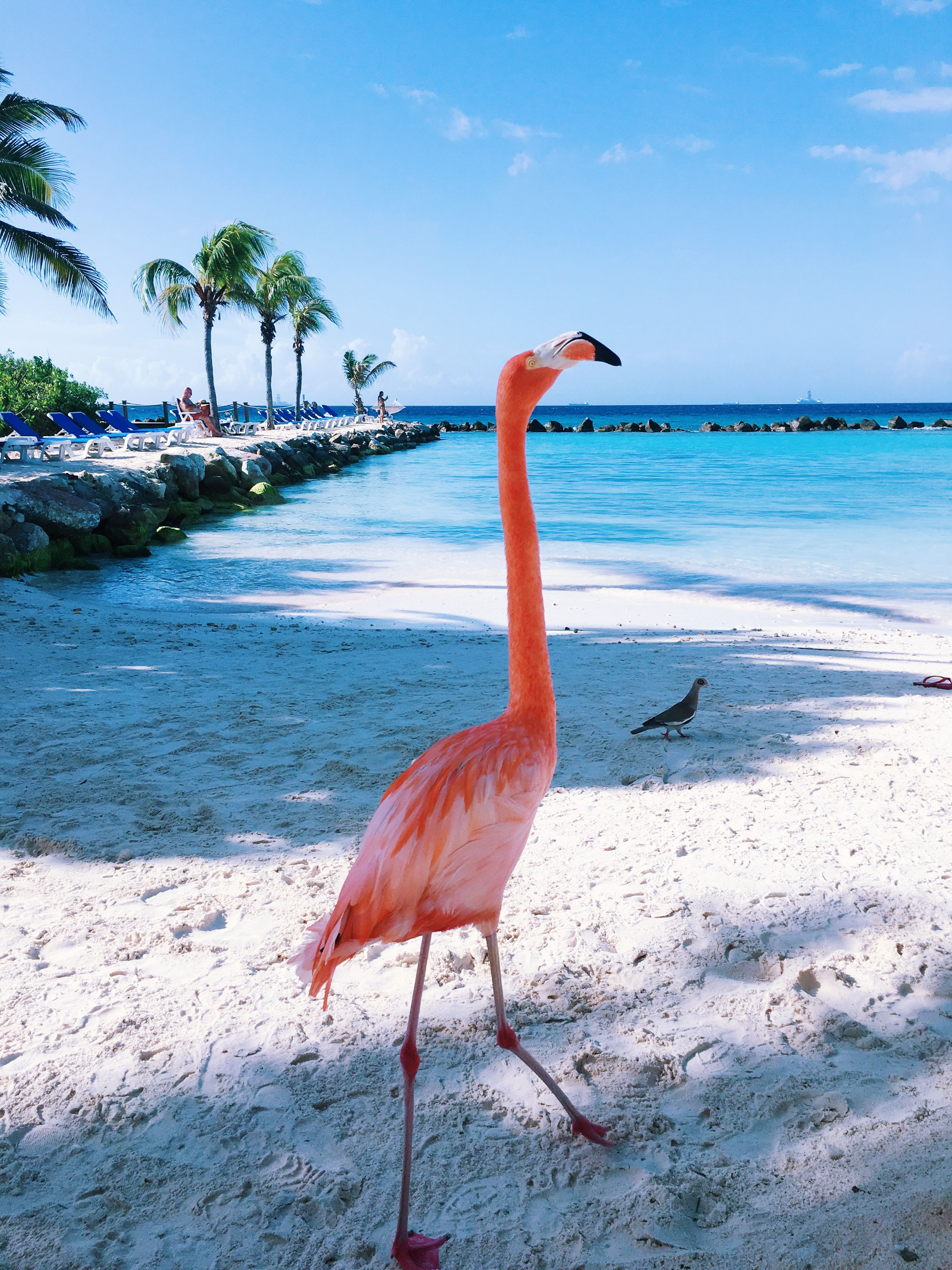Flamingo Beach At The Renaissance Resort Private Island In Aruba