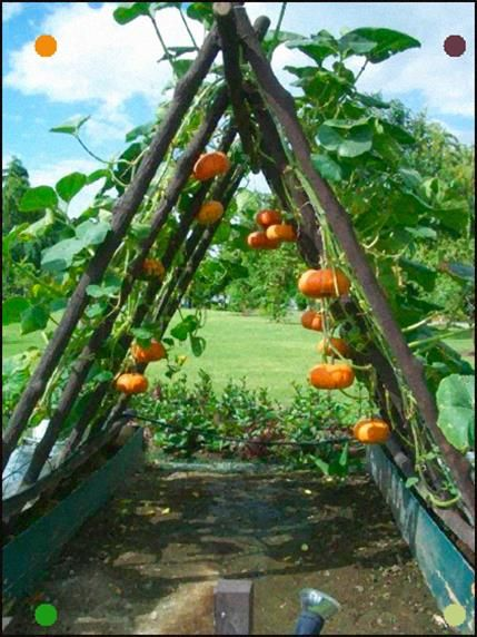 A New Way To Grow Pumpkins If In A Windy Area Be Careful Where You Position It. …