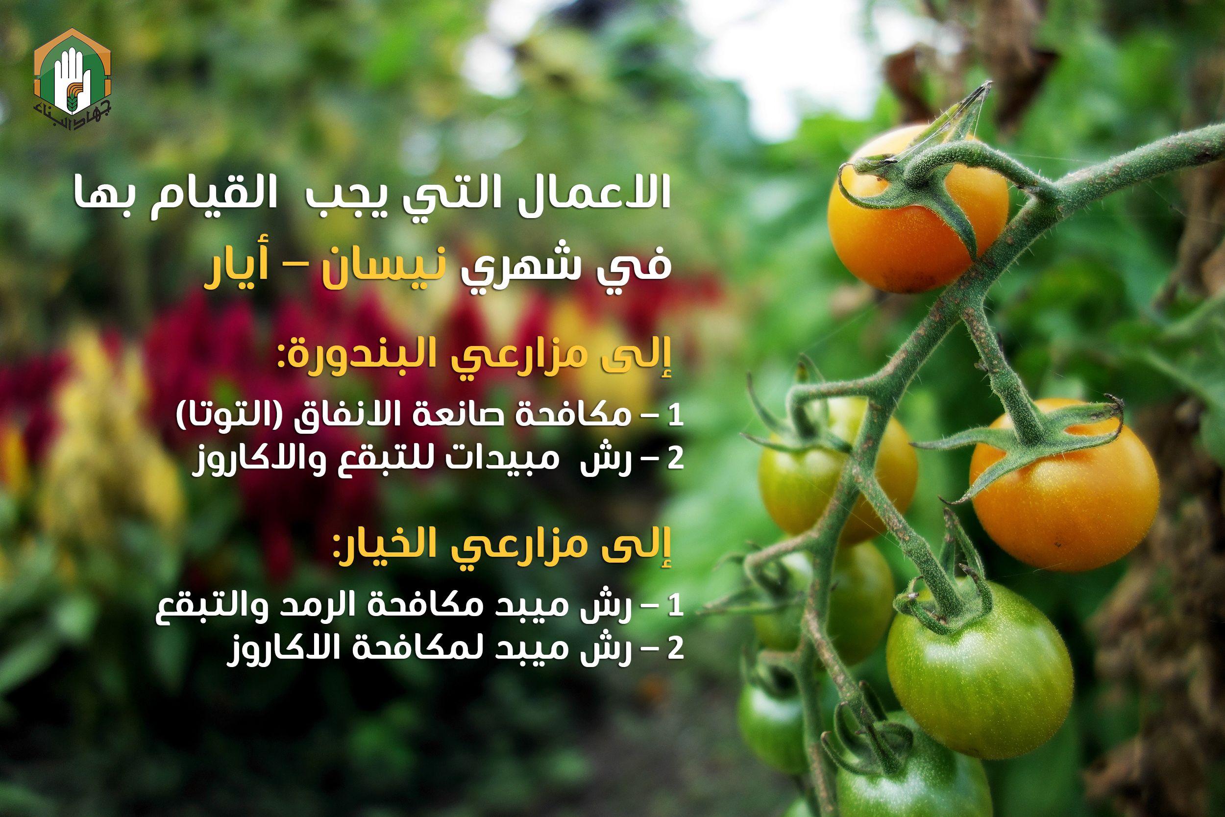 إلى مزارعي الخيار والبندورة Vegetables Plants
