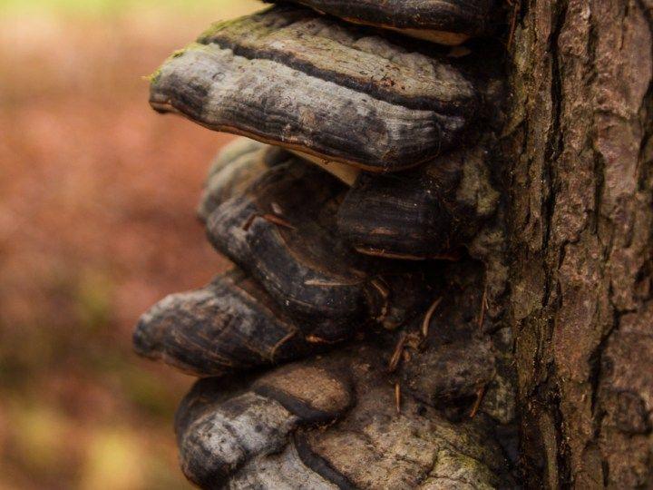 Pilz an einem toten Baumstamm