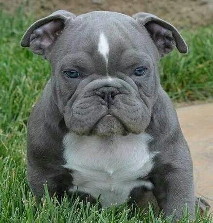Awwwwww!!!! So damn cute :) I want him!
