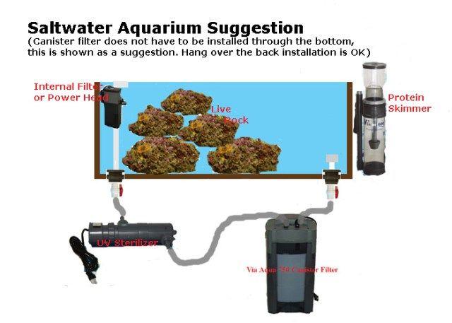 edf9710933a saltwater fish tank filter setup - Basic Saltwater Aquarium Set Up  Marine  Tank Diagrams