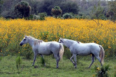 White Horse, beautiful | Pet Lover