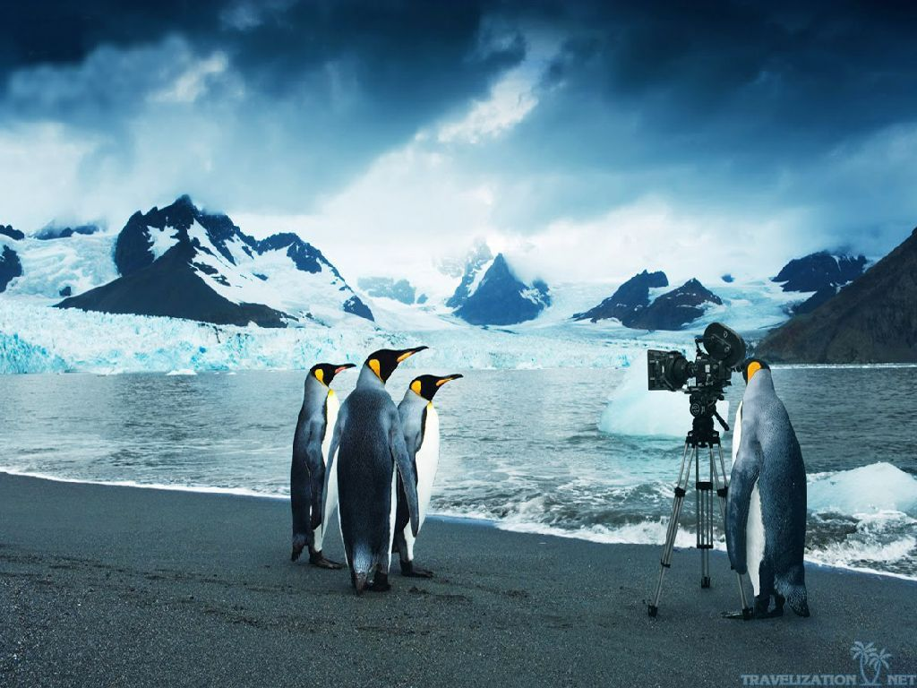 Baby Penguins HD Desktop Wallpaper Widescreen High Definition 1920x1080 Images Of