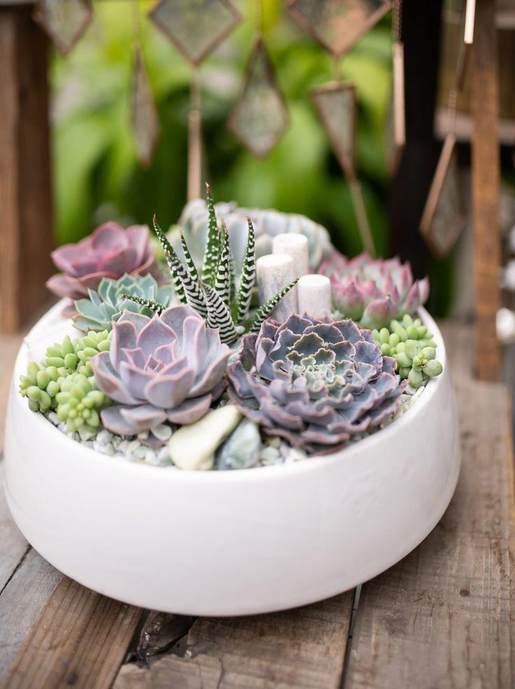 Photo of Jubilant Garden | Christmas Indoor Planters, Indoor Plants + Floral, New In-Store, Succulents, Winter | West Coast Gardens