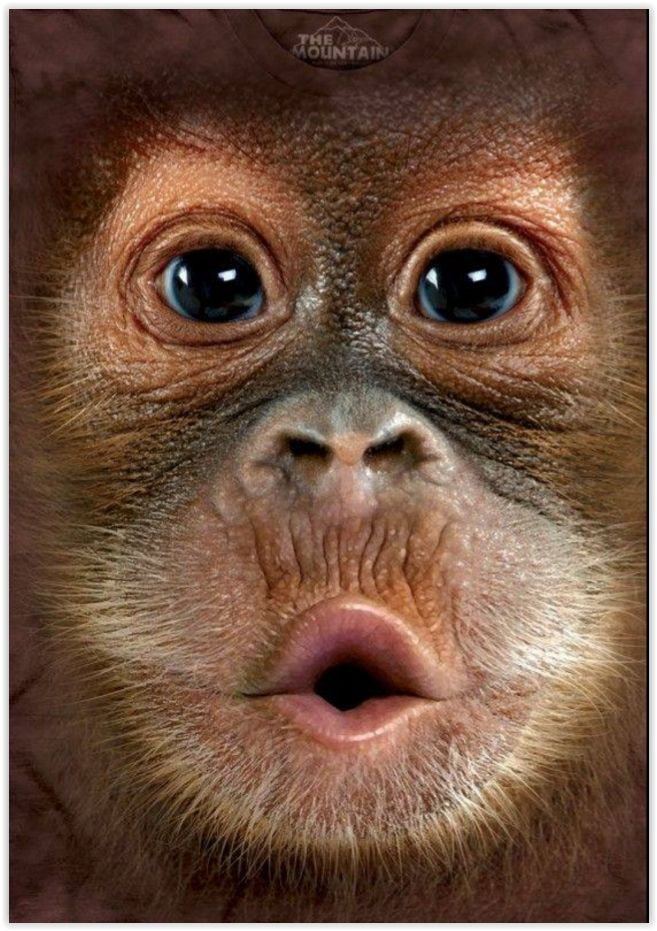 Małpka_portret
