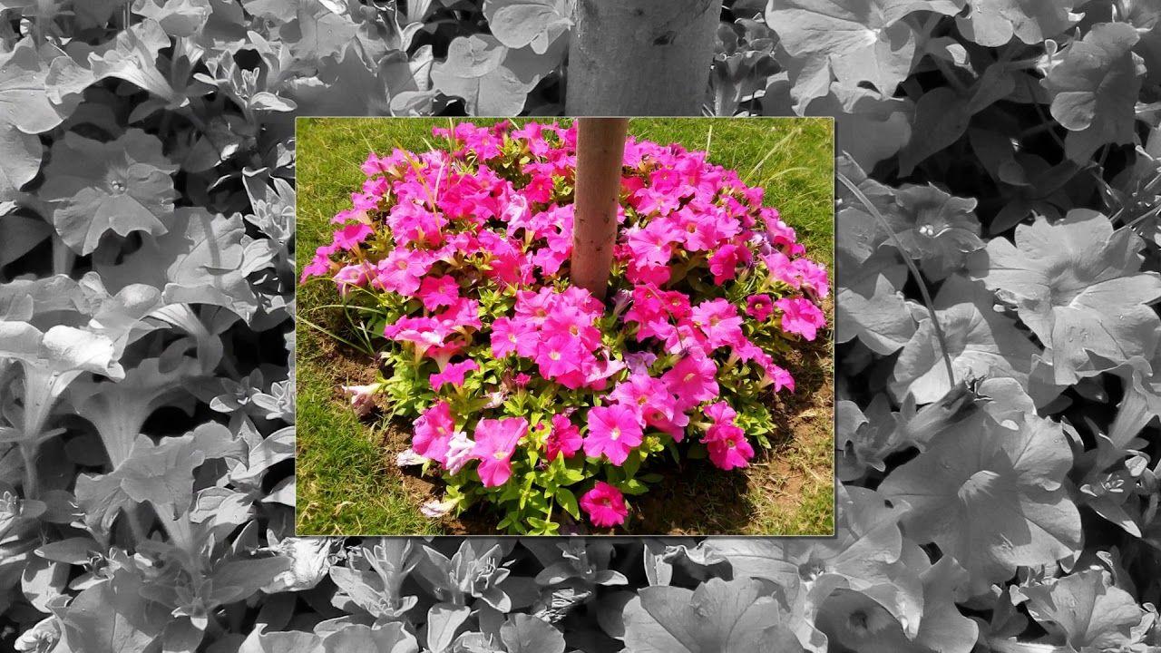 Pakistani Beautiful Flowers Part 1 Parts Of A Flower Beautiful Flowers Flowers
