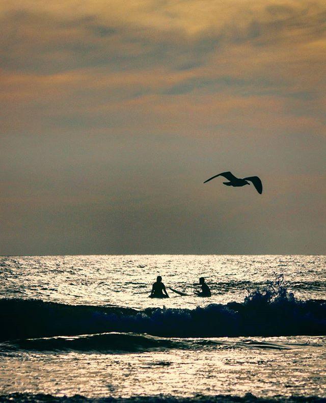 Surfers at sunset on the California coast.  Gotta love this state!  #california #socal #sandiego #photography #beautiful #sunset @theresandiego @sandiego.city @passportsandiego #canoncamera #canonphotography #southerncali #socallife #socallifestyle #beachlife #beachfun #lajolla #tidepools #waves #beach #surflife #surfstyle #getoutside #getoutdoors #exploreyourworld #adventure #photo #pacificcoast #californiacoast #coastal #surf #ocean #lajollalocals #sandiegoconnection #sdlocals - posted by | Ja