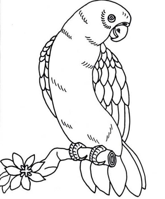 Bird Coloring Page Parrot | Repujado ( Aves ) | Pinterest | Bird ...