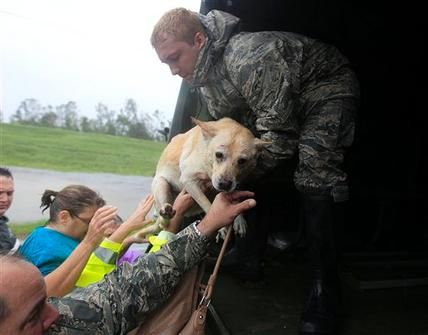 How To Get Your Dog Ready For A Natural Disaster Emergency