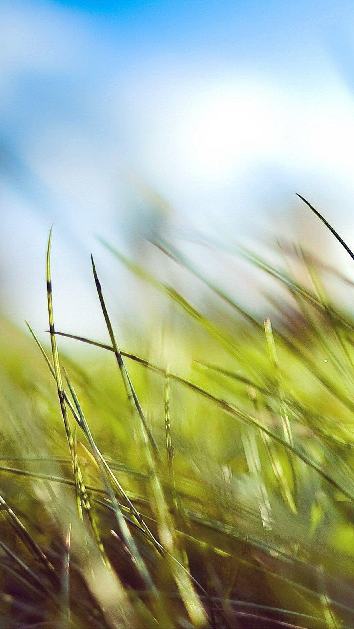 iPhone wallpaper Grass wallpaper, Nature iphone