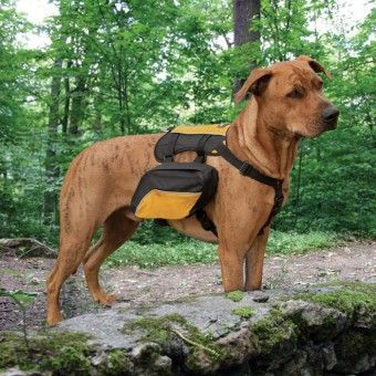 Kurgo Wander Pack Black Dog Collars Leads Harnesses Accessories Petbarn Dog Backpack Dog Activities Hiking Dogs