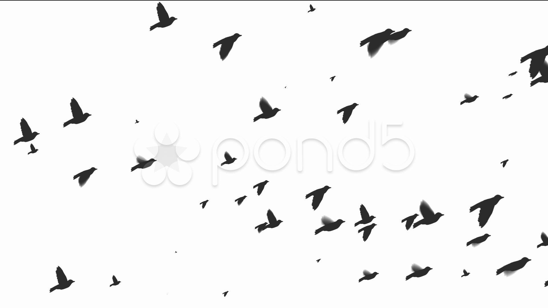 flying birds - Google Search