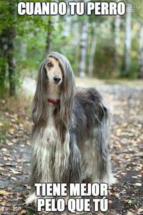 Imagenes De Risa Memes Chistes Chistesmalos Imagenesgraciosas Humor Beautiful Dogs Dog Breeds Dogs