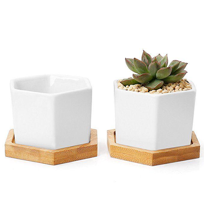 Amazon Com Greenaholics Succulent Plant Pots 2 76 Inch 400 x 300