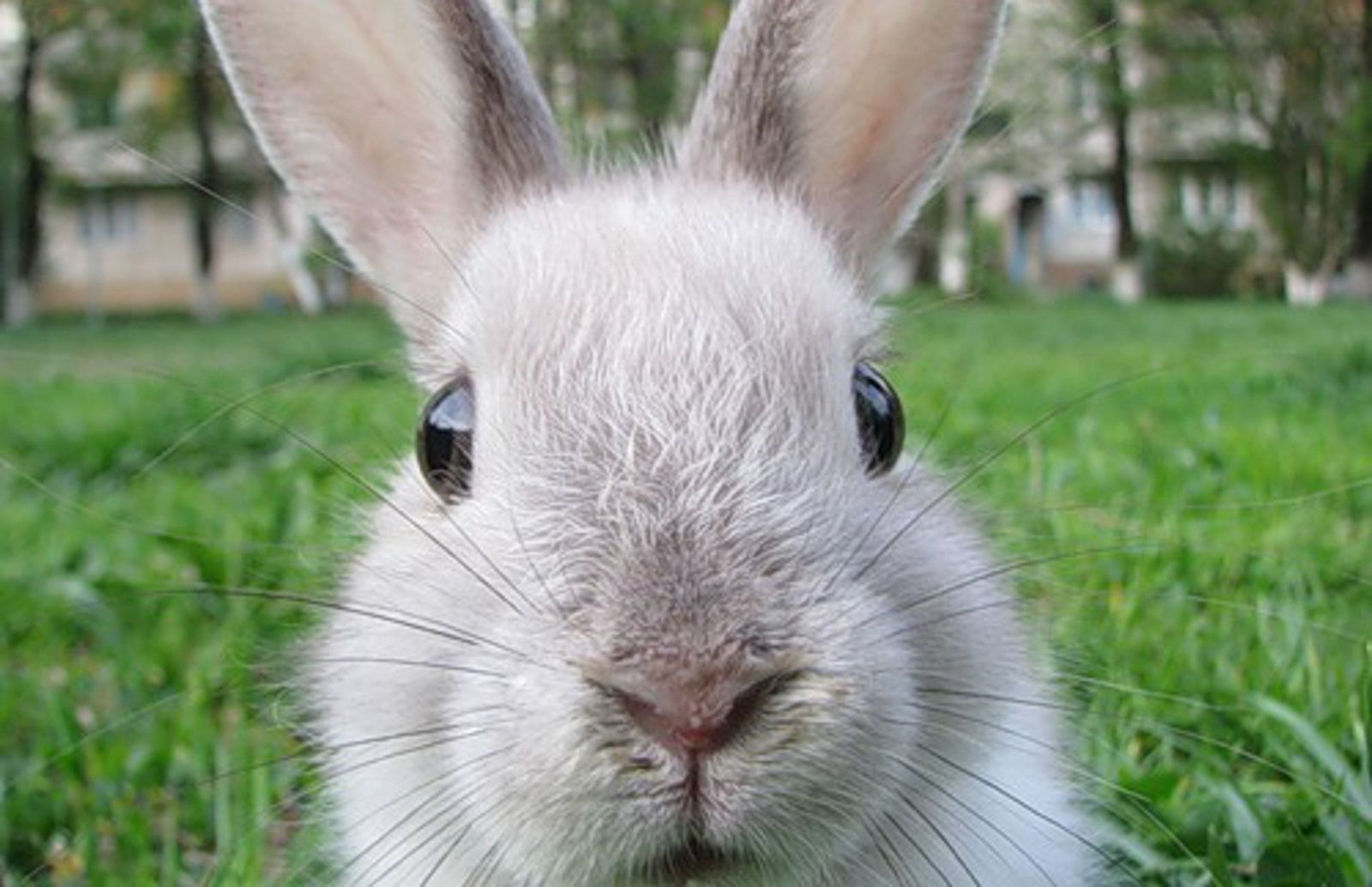 Woo! India Bans Import of Cosmetics Tested on Animals