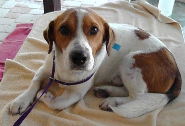 Pin By Fundapetmiracle On Dogs Beagle Rescue Beagle Dog Boarding