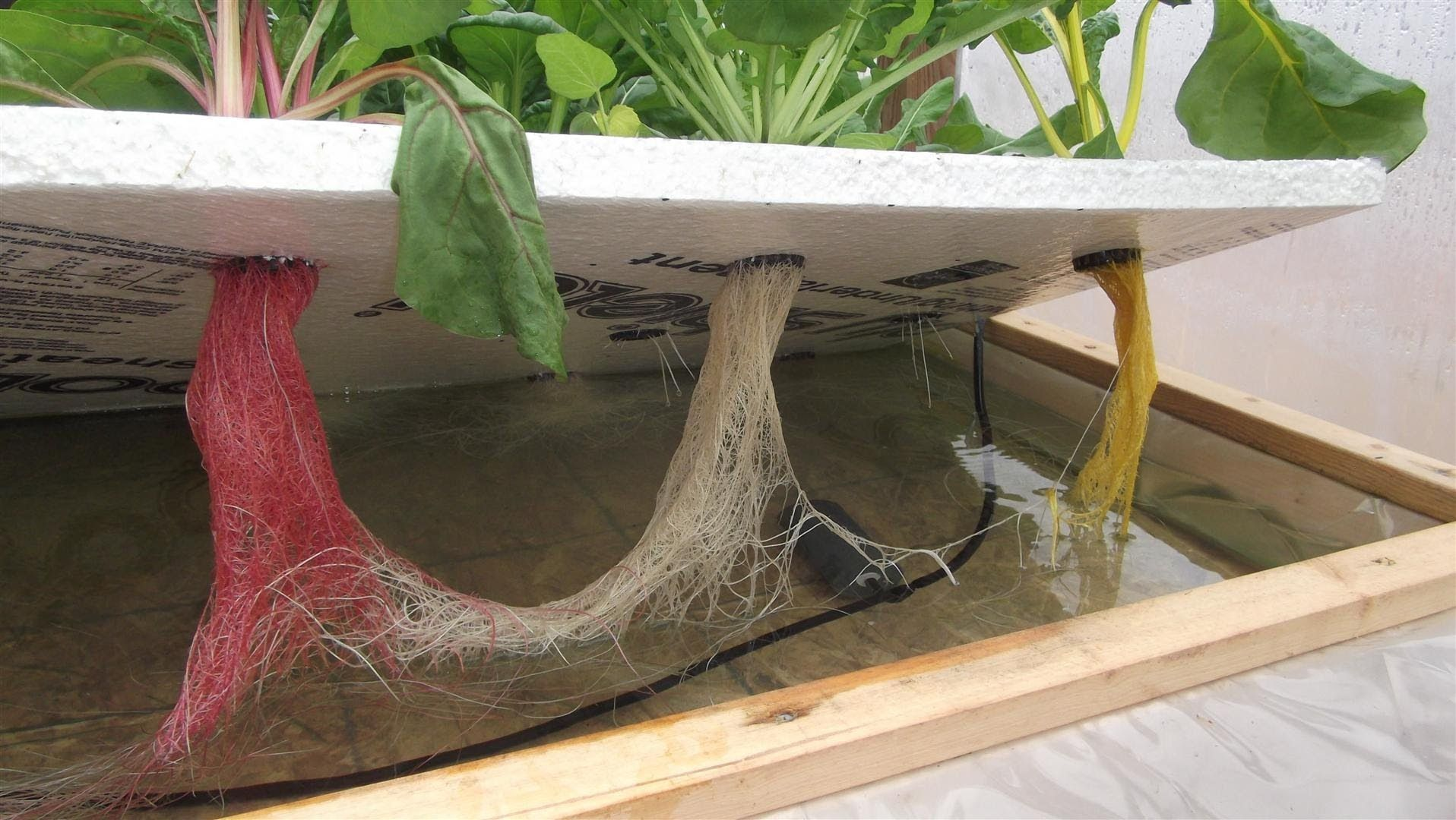 Hydroponics Without Electricity Started A Simple One