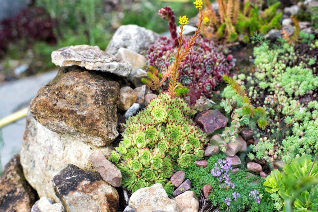 Steingarten anlegen: Ideen, Bilder & Anleitung #steingartenideen