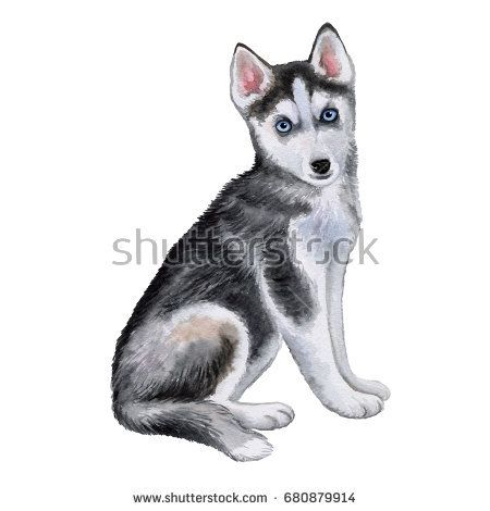 Husky Dog Puppy Isolated On White Background Watercolor