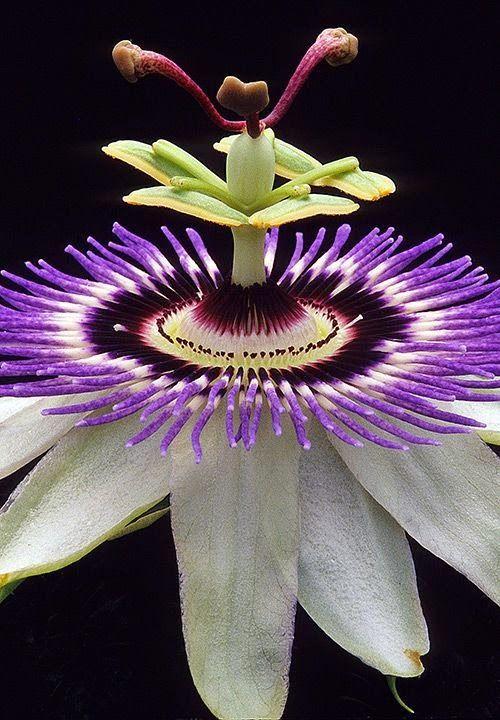 55 Beautiful Pictures Of Flowers For Your Inspiration Ungewohnliche Blumen Exotische Blumen Seltene Blumen