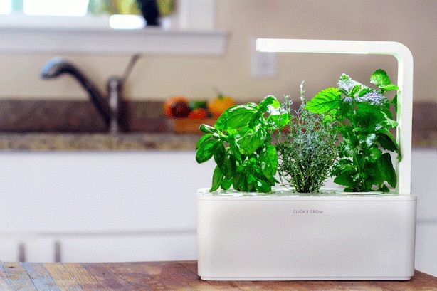 A Grown Up Smart Countertop Herb Garden