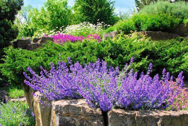 Kocimietka Na Zime Pozostawiamy Lodygi Aby Chronily Korzenie Przed Mrozem Wiosna Scinamy Przy Ziemi Sadzimy Wiosna Lub Jesienia Wysie Plants Garden Topiary