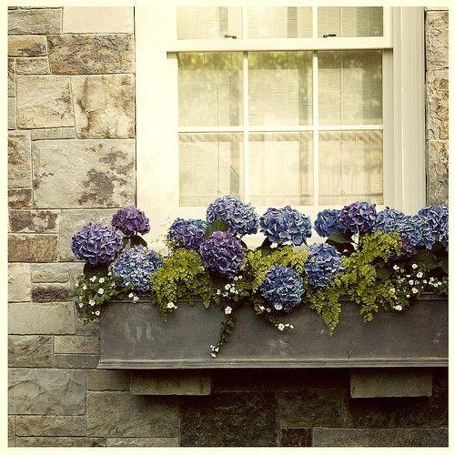 Blue Violet Hydrangea Window Box White Stone Grey Wall By Adunaphel13
